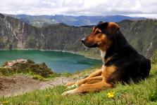 psí doprovod k laguně