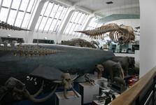 Londýn - Prírodovedné múzeum