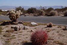кактусы Чолла - еще одна гордость парка
