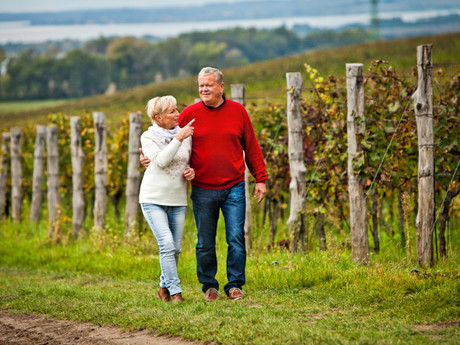 procházka po vinohradu