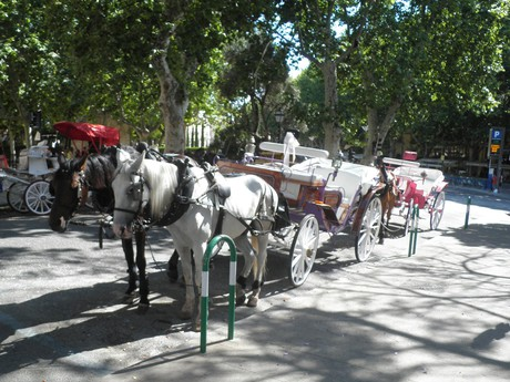 horse carriages near the cathedral