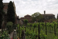 виноградник возле базилики