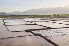 ryžové polia pri Nha Trangu