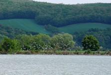 Пьештяны - птичий остров Чайка