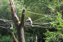 Zoologická záhrada v Zlíne