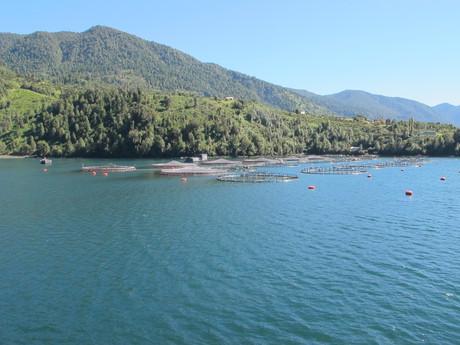 sádky lososů za Hornopirénem