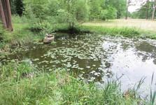 jazierko parku