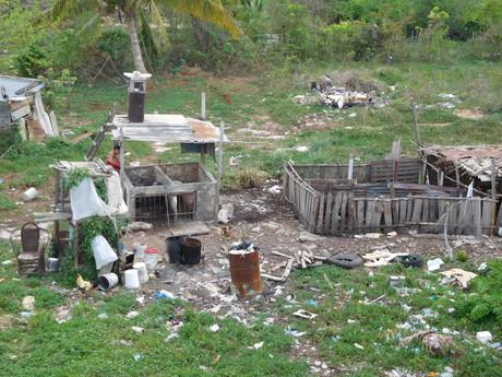 и это Куба - соседний сад на Плайя-Ларга